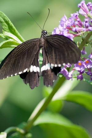 Tropical butterfly on a flower close-up Stock Photo - 18437967