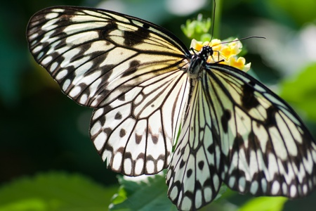 Tropical butterfly on a flower close-up Stock Photo - 18437968