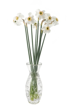 Narcissus flower in a vase on a white background photo