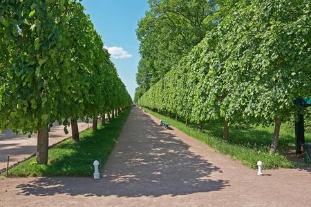 peterhof: Walk of Peterhof, Russia