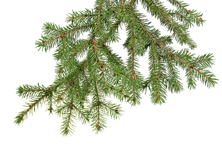 Christmas tree branch on a white background isolated photo