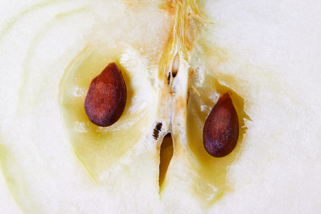 apple in the context of macro with seeds