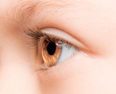 brown eye: Beautiful brown eye macro shot, macro Stock Photo