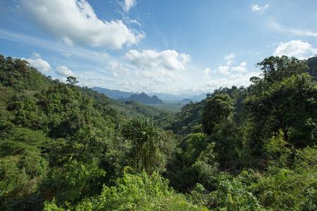sok: Landscape view of lush green rainforest in Khao Sok National Park, Thailand