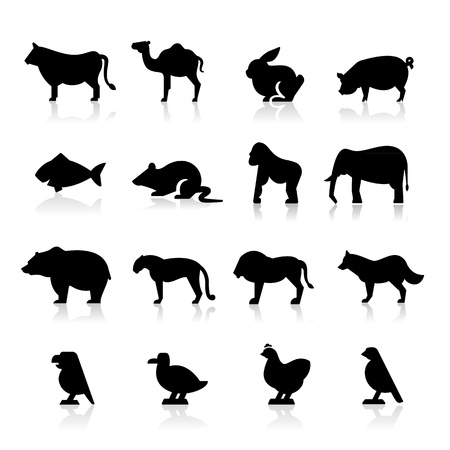 animal: Animals icons