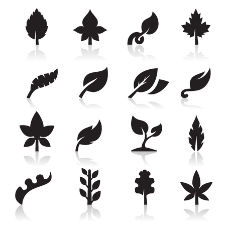 oak leaves: Leaf icon Illustration