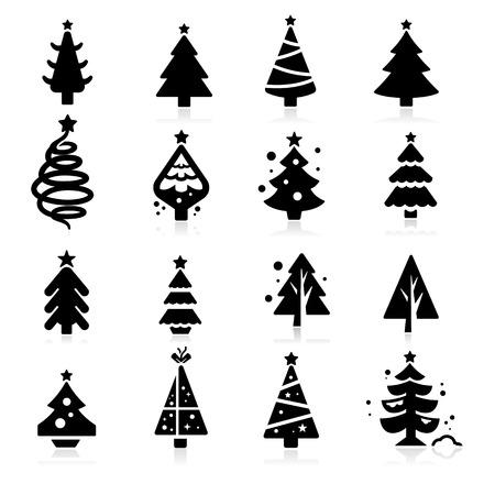 pine tree: Christmas tree