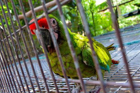 Parakeet inside a cage