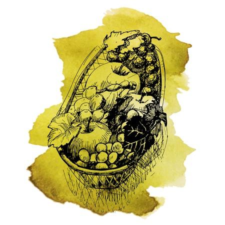 canasta de frutas: Cesta de frutas dibujado a mano ilustraci�n vectorial. Vectores