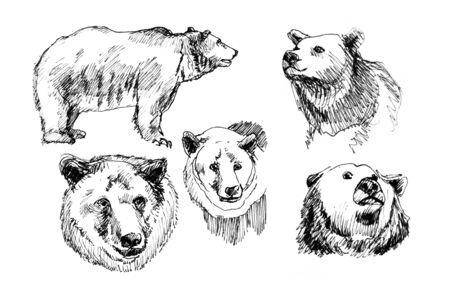 hand-drawn illustration of a bear in the different corners illustration