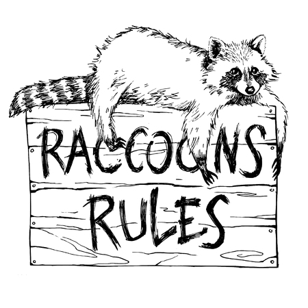 raccoons: Funny and touching raccoon lies on a plate raccoons rules hand drawn engrave sketch vector illustration. Keep calm and love a raccoon