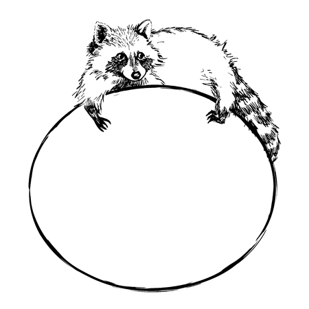 lies: Funny and touching raccoon lies on a round banner with blank space for text. Cute raccoon hand drawn engrave sketch vector illustration. Illustration