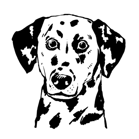 Young dalmatian vector hand drawn illustration. Black and white Spotted dog portrait.