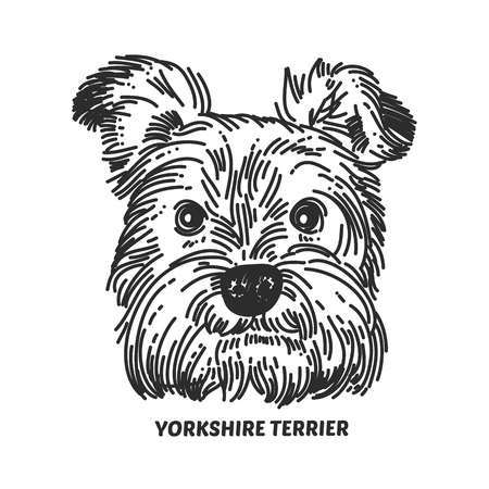 Yorkshire terrier face. Dog head sketch style. Vector illustration 写真素材