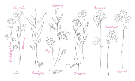 Wildflowers one line drawings set. Camomile, hop silhouette clipart. Twigs and flowers with names minimalistic illustrations pack. Plants vector sketch. Botanical isolated design elements Иллюстрация