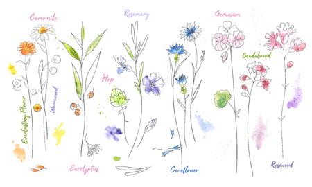 Polne kwiaty ręcznie rysowane zestaw ilustracji akwarela. Rumianek, rysunek farby akwarelowej chmielu. Paczka gałązek i kwiatów z imionami minimalistycznymi ilustracjami. Szkic wektor roślin. Botaniczne izolowane elementy projektu