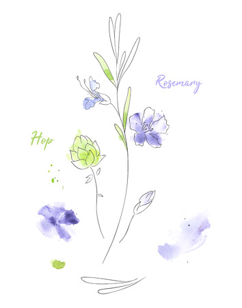 Wildflowers hand drawn watercolor illustration. Rosemary and hop aquarelle paint drawing. Twigs and flowers with names minimalistic clipart. Plants vector sketch. Botanical isolated design elements