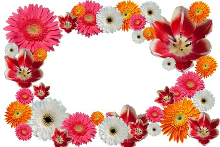 Photo floral frame  Stock Photo - 8749619