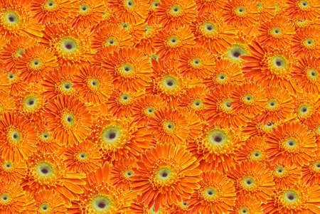 single orange flowertiles Stock Photo - 8749770