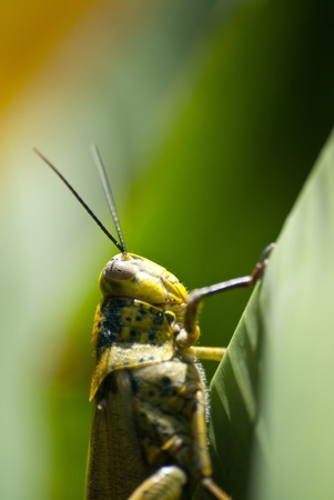 macro picture of small insect , drop Stock Photo - 9347954