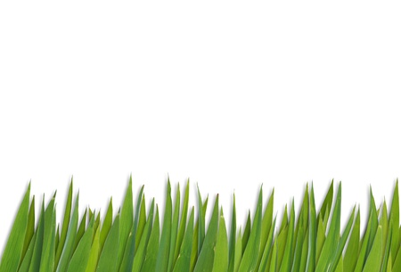 advertize: blank grass pattern isolated on white background