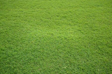 texture of green grass field photo