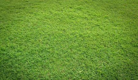 texture of green grass field photo