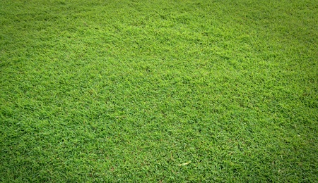 grass field: texture of green grass field Stock Photo