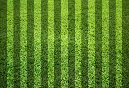 blank grass field in stripe form photo