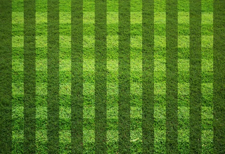 blank grass field in stripe form photo