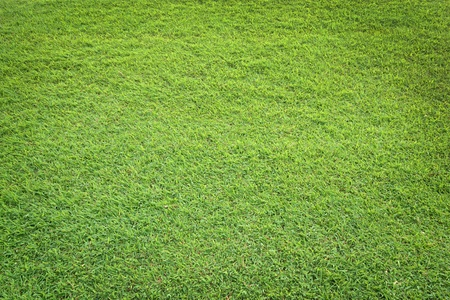 pattern of green grass field Stock Photo - 9921703