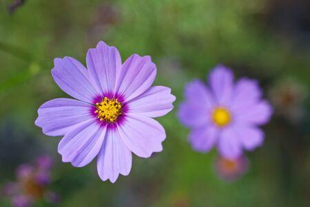 beautiful flower close up view photo