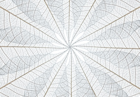 background from leaf core stucture on white background. photo