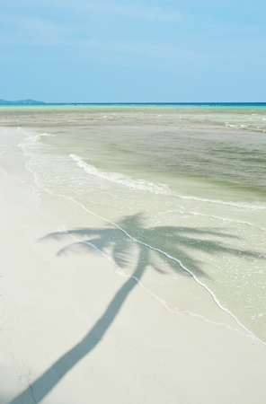 beack: landscape of sand beack with coconut palm tree shadow.