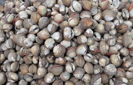 close up of raw sea food. photo