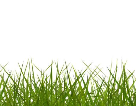 green grass row on white background. photo