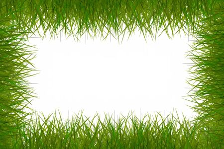 attractive grass frame on white background. Stock Photo - 11413606