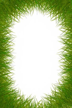 attractive grass frame on white background. Stock Photo - 11413605