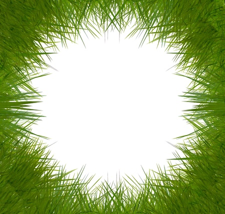 attractive grass frame on white background. Stock Photo