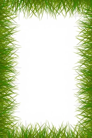 attractive grass frame on white background. photo
