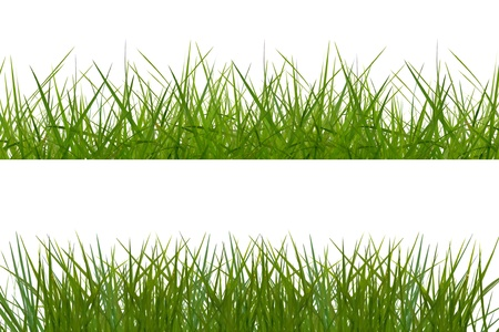 general green grass background on white background. Stock Photo - 11448765