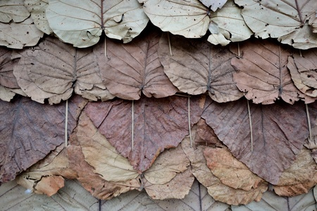 close up of leaves pattern for background. Stock Photo - 12000826