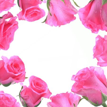 Frame from pink rose for love concept.
