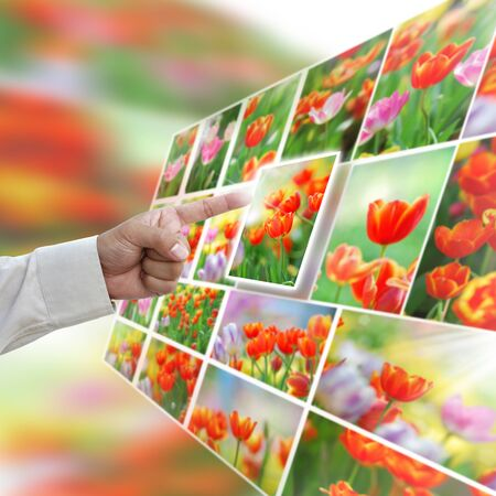 Artwork of selection with close up tulip pictures. photo