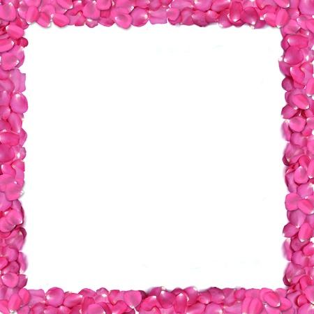 forme carre: Cadre de forme carr�e de p�tales de rose sur fond blanc. Banque d'images