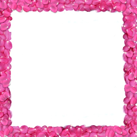 Square shape frame from rose petals on white background. photo
