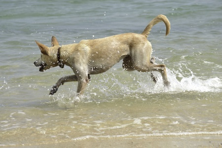 Young adult dog action in the sea. photo
