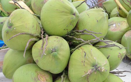 Fresh coconuts palm. photo