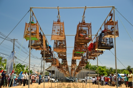 KO SAMUI,THAILAND - AUGUST 12, 2012: Row of bird caes with competitions during famous local birds sound contest on August 12, 2012 in Ko samui, Thailand
