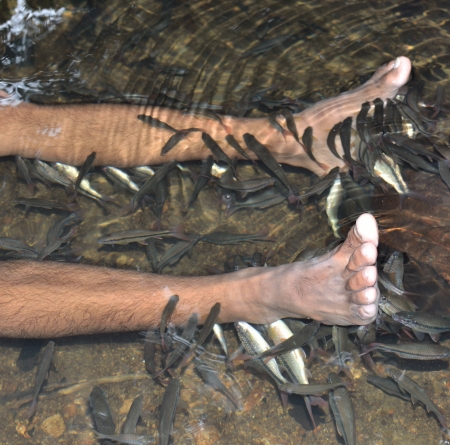 fish spa: Fish spa in the real nature at the waterfall.